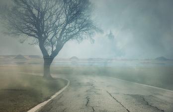 reformist mist